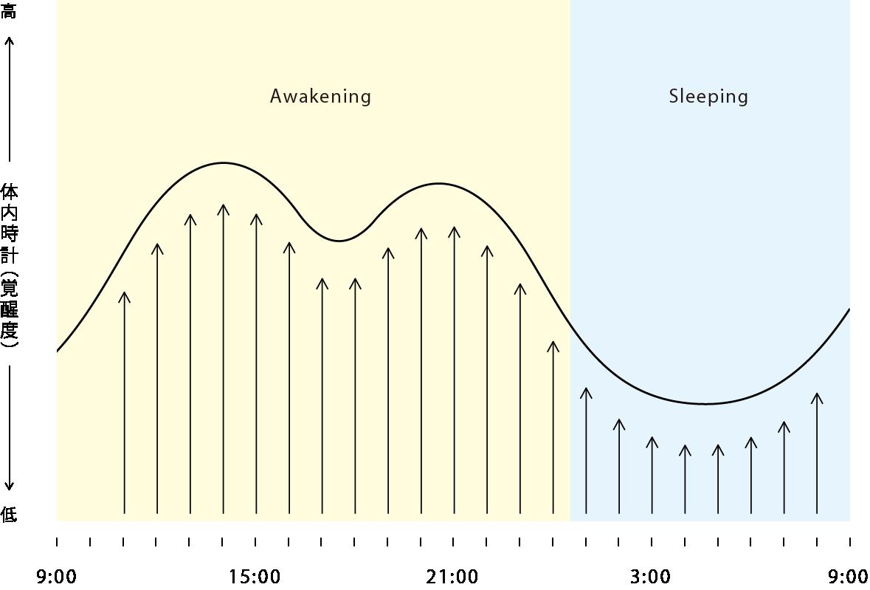 体内時計グラフ